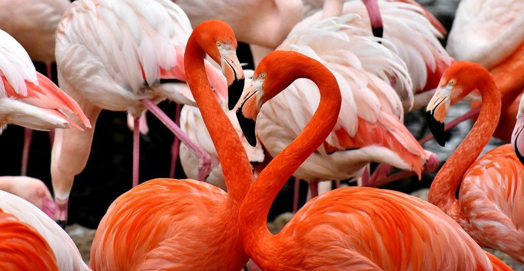 Bluza z flamingami – czyli co nosić w tym roku?
