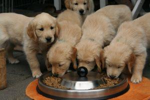 Kupujemy karmę dla psa